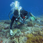 Diver looking at turtle tagged